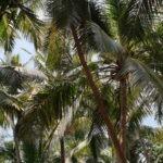 Palmbos Goa © Maarten Olthof