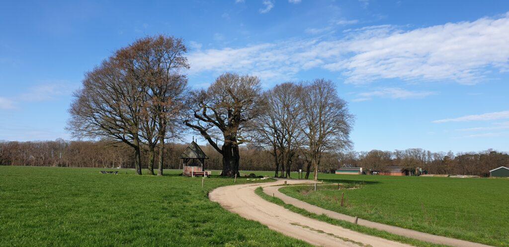 Hilligenpad - Kroezeboom © Maarten Olthof